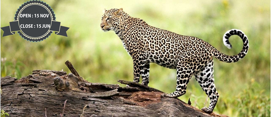 rajaji-national-park-packages