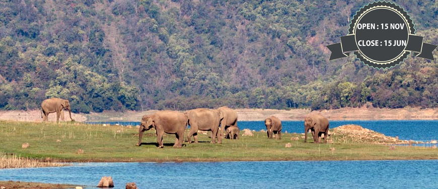 rajaji-national-park-safari-booking