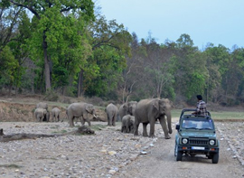 rajaji-national-park