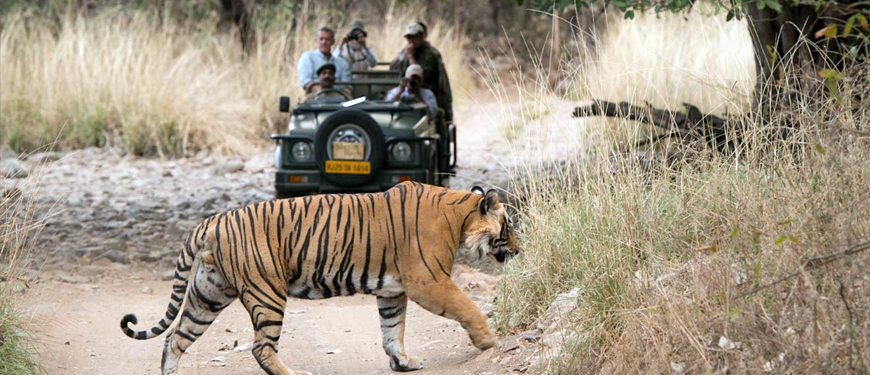 rishikesh-wildlife-tour-package