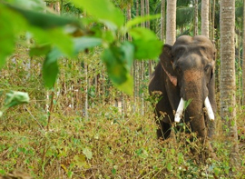 rishikesh-wildlife-tour
