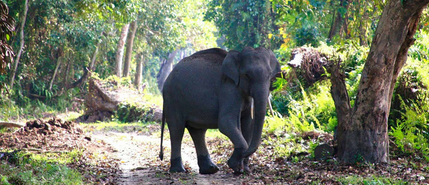 wildlife-safari-in-rishikesh